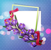 Vector greeting card with blue crocuses , frame, red ribbon Stock Photo