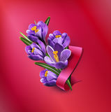 Vector greeting card with blue crocuses, red ribbon Royalty Free Stock Photos