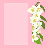 Vector greeting card with cherry blossom. Stock Photography