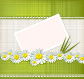 Vector greeting card with daisies Stock Images