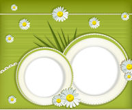 Vector greeting card with daisies Royalty Free Stock Images