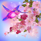 Vector greeting card with flowers and humming-bird Stock Photos