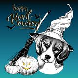 Vector greeting card for Halloween. Dog wearing the witch hat. Broom and pumpkin lanterns. Hand drawn. Royalty Free Stock Images