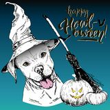 Vector greeting card for Halloween. Dog wearing the witch hat. Broom and pumpkin lanterns. Hand drawn. Stock Photos