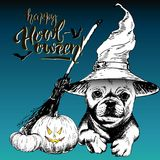Vector greeting card for Halloween. Dog wearing the witch hat. Broom and pumpkin lanterns. Hand drawn. Royalty Free Stock Image