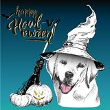 Vector greeting card for Halloween. Dog wearing the witch hat. Broom and pumpkin lanterns. Hand drawn. Stock Photo