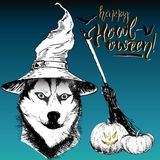 Vector greeting card for Halloween. Dog wearing the witch hat. Broom and pumpkin lanterns. Hand drawn. Royalty Free Stock Photos