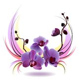 Vector greeting card with orchids bouquet Royalty Free Stock Photography