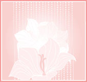 Vector greeting card with pale pink flowers Royalty Free Stock Photography