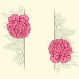 Vector greeting card with peonies. Stock Image