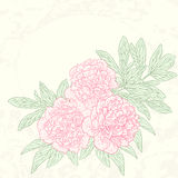 Vector greeting card with peonies. Stock Photography