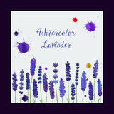 Vector greeting card with watercolor lavender. Stock Photos