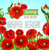 Vector greeting poster of spring poppy flowers Stock Photo