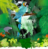 Vector Grey parrot and Ara Macaw in Jungle Rainforest Stock Images