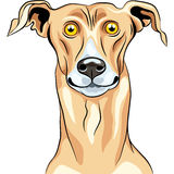Vector Greyhound Dog breed smile Stock Photos