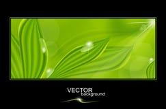 Vector groene achtergrond met bladeren en dalingen Stock Afbeeldingen