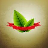 Vector groene bladeren Stock Foto