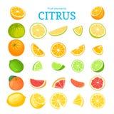 Vector grote reeks rijpe tropische vruchten Rood sinaasappelen, pompelmoes, grapefruit, kalk, citroen en blad Inzameling van heer stock illustratie