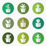 Vector group of cactus in the circle Stock Photo