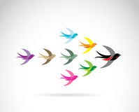 Vector Group of colorful swallow birds. Royalty Free Stock Image