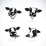 Vector group of a cow head design on white background. Farm Stock Images