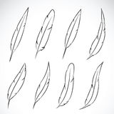 Vector group of feather. Stock Photos