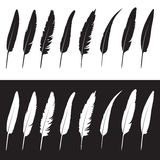 Vector group of feathers Stock Images