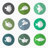 Vector group of fish in the circle. On white background Stock Photo
