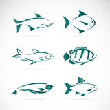 Vector group of fish Stock Photos