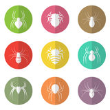 Vector group of spider in the circle. On white background Royalty Free Stock Photo