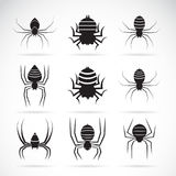 Vector group of spiders on white background. Insect Animals. Spi Royalty Free Stock Image