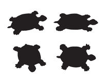 Vector group of turtle Royalty Free Stock Photo