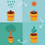 Vector growth concept Royalty Free Stock Photography