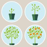 Vector growth concept vector illustration