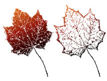 Vector grunge autumn leaves. Stock Photo