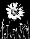 Vector Grunge Daisy stock illustratie