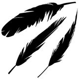 Vector grunge feathers. Vector illustrations of various bird feathers in grunge style Royalty Free Stock Image
