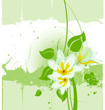 Vector grunge floral backgroun. Vector grunge floral plant background Stock Photography