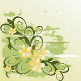 Vector  grunge floral background. Floral background (abstract vector ornament Stock Photography