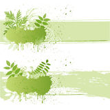 Vector grunge nature leaf Royalty Free Stock Photography