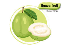 Vector Guava fruit isolated on color background,illustrator 10 eps Royalty Free Stock Images