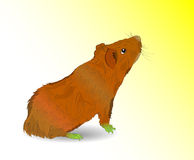 Vector guinea pig. Vector illustration. EPS10. Transparency and art brushes used Royalty Free Stock Images
