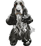 Vector Gun dog English Cocker Spaniels sitting Stock Photography