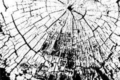 Vector hölzerne Beschaffenheit Abstrakter Hintergrund, alter Baumschnitt vektor abbildung