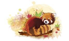 Vector ha illustrato il ritratto del panda minore Red anche chiamato Orso-CA Fotografia Stock