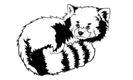 Vector ha illustrato il ritratto del panda minore Red anche chiamato Orso-CA Fotografia Stock Libera da Diritti