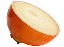 Vector half of the onion. Royalty Free Stock Photo