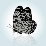 Vector hand drawing butterfly. Royalty Free Stock Images
