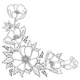 Vector hand drawing corner bouquet with outline Anemone flower or Windflower, bud and leaf in black isolated on white background. Ornate contour Anemone for royalty free illustration