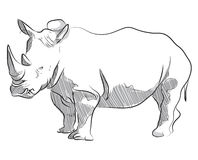 Vector hand drawing illustration of rhino standing Stock Image